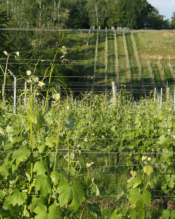 Nebbiolo Alto Piemonte - I Filari
