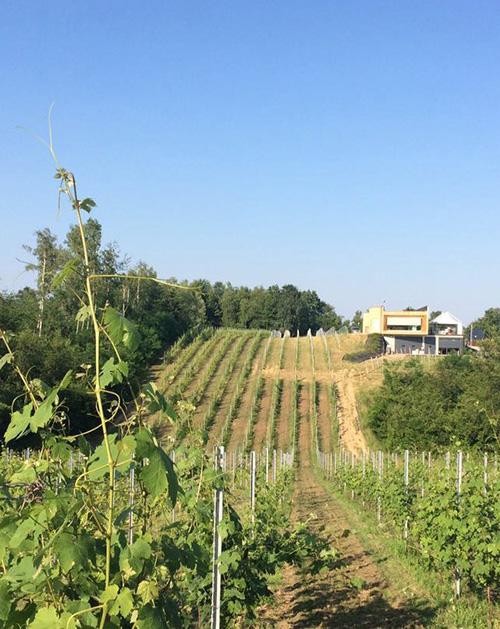 Nebbiolo Alto Piemonte - Newsletter